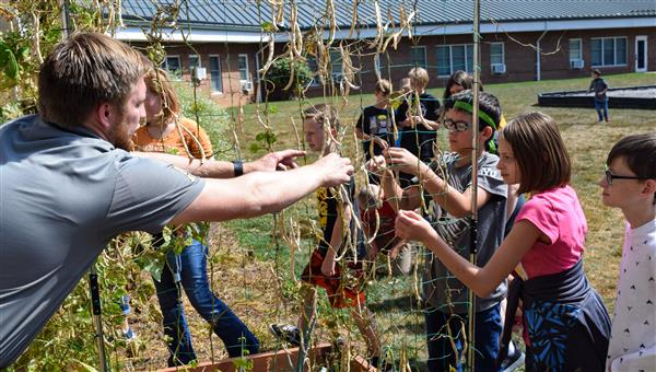 Riley Ellison, Autumn Scott and Mark Spaulding work with their teacher Benjamin Brown to harvest dried green beans at the sch