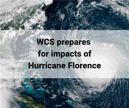 WCS prepares for impacts from Hurricane Florence
